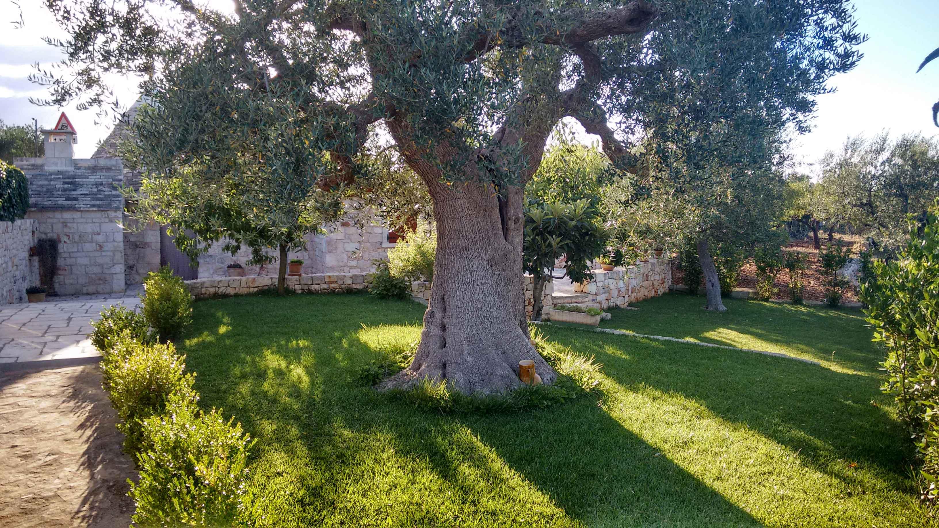 B b trulli castellana grotte alberobello il giardino for Il giardino degli ulivi monteviale